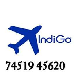 Golden chance Urgent REQUIREMENT FOR  airline job LTD.