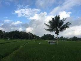 Tanah sawah lokasi datar sawah produktif
