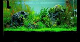 Planted aquarium set up and Aquascape at ur door step with fishes