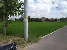 Tanah zona kuning Ld 125 x p16 di trucuk klaten