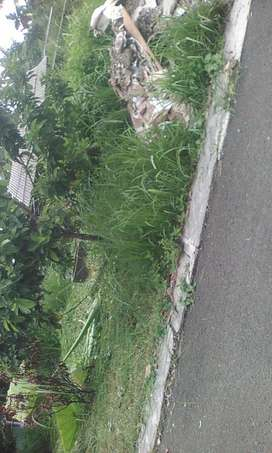Jasa potong rumput pakai alat mesin rumput dan tebang pohon
