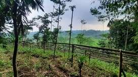 Dijual Murah Tanah Subur 2000 m2 di Darangdan Purwakarta Jawa Barat
