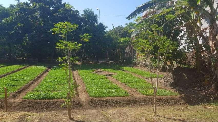 Tanah Siap Bangun Komplek Pertamina Klayan Cirebon