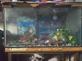 Fish aquarium in noida sec 45