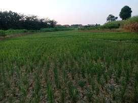Tanah Murah di kertajati dekat bandara baru investasi pasti untung 40%