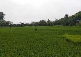 Dijual tanah lokasi jl.  Raya Darmaga, Bogor Barat