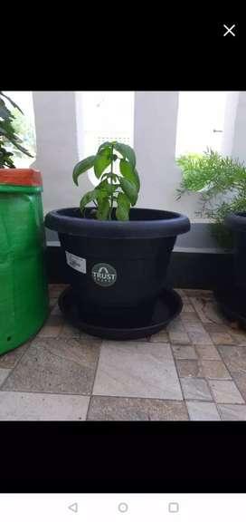 Plant Pot Big - 16 inches - 6 Pcs (Sealed Pack)