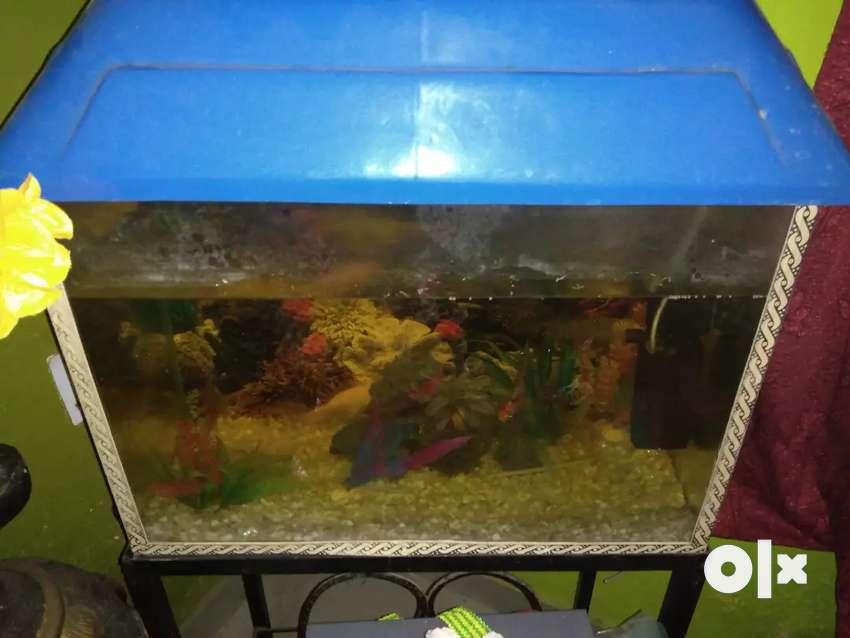 Fish tank with 7 fish 0