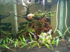 1.5 feet Aquarium of Rs.25000