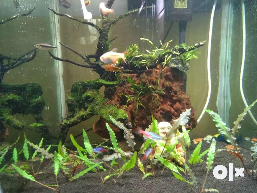 1.5 feet Aquarium 0