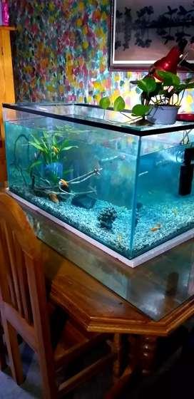 I sell my new 3.5 feet aquarium