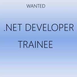 Wanted net developer (female)