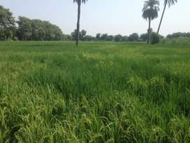 17 Acre Agricultural Land for Sale in Muzaffargarh