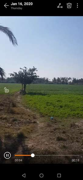 48 Acre Agriculture land for sale in sanghar.