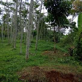 Tanah luas 4052 m + pohon Sengon di Gunung pati