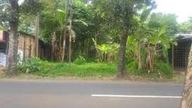 Disewakan tanah di jalan raya padamara luas 500m