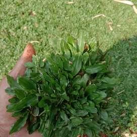 Tukang rumput bojongsari/tukang taman di bojongsari