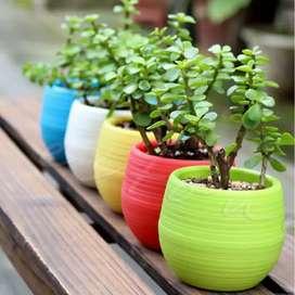 Pot bunga plastik ukuran mini (hanya pot)