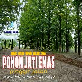 Jual Tanah 350m² Bonus Pohon Jati Emas Pinggir Jalan di Bogor Timur