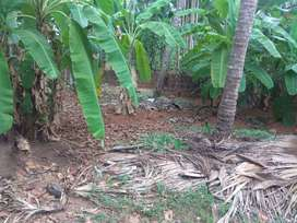 Land for sale in vellimadukunnu