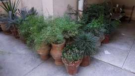 Home plants for sale. Please call for details or visit .