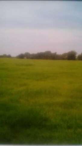 24 biswa agricultural land in Inhauna Dist- Amethi