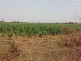 Very very urgent sale 6.25 acre land for sale in dongargaon-A 18 lac