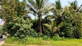 Tanah kebun datar siap bangun luas 750 m² pinggir jalan Angkot di Daru