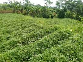Tanah kebun murah untuk makam/kuburan, kebun, vila, ternak bandung