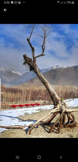 Huts for rent in skardu