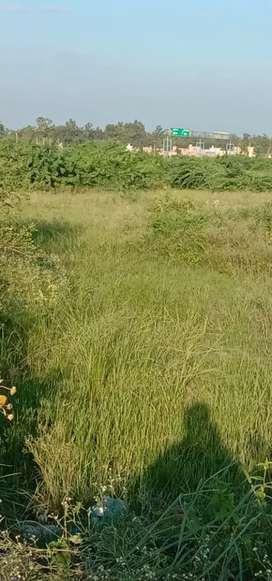 200 gaj plot rajpura Shiva enclave near bedi farm house