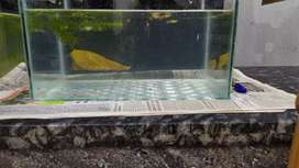 Aquarium for sale in vadakara