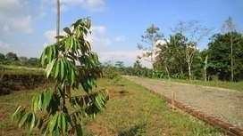 LIMITED Kavling Durian Delicious investasi 15 menit Kantor Pemda Tasik