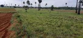 Agricultural land 2.8acre sale per acre 5lacks (86/37/41/76/99)