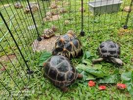 Keeper hewan atau penjaga hewan peliharaan