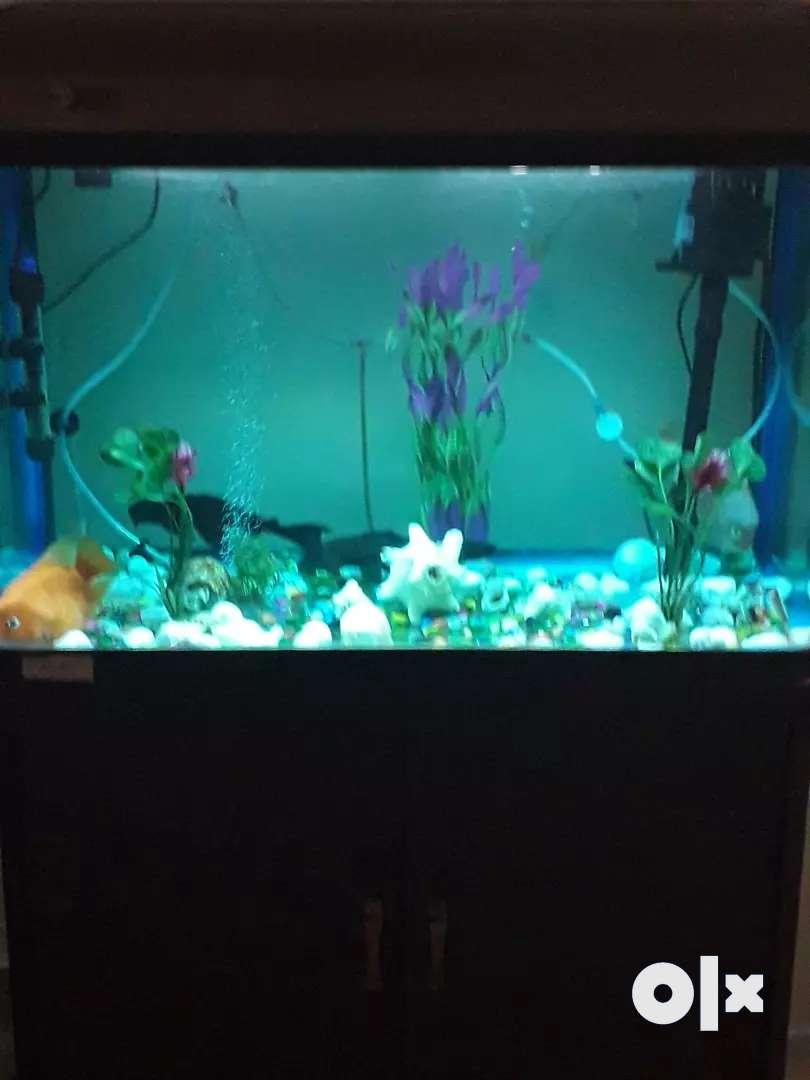 Aquarium with almirah 0