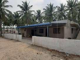 Coconut farm for sale