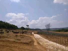 Tanah kavling perkebunan Mustikajaya