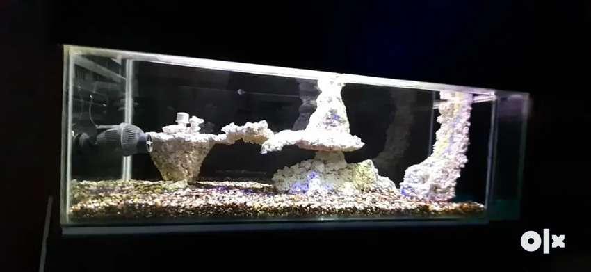 Marine Fish aquarium