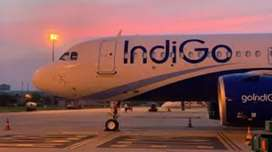 New job opportunity in indigo airlines