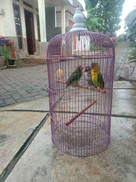 Lovebird pasangan josss