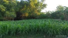 Tanah nol Jalan Cor, Muka Lebar, Akses Jl Raya Propinsi Mojokerto