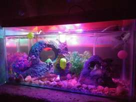 aquarium  with all accessories and fishes