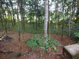 25 Cents of land along with house for sale in Kozhimala