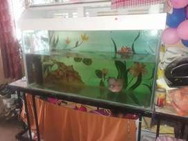 Aquarium and stand and top
