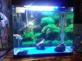 Chinese aquarium