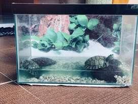 Jual kura-kura brazil sehat + aquarium
