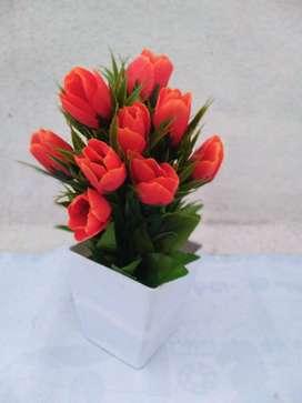Show flower