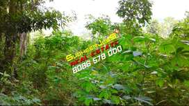 1 Acre Land Near KATTAKKADA Town,For Immediate Sale...SudheerJeeS...