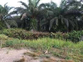 Lahan Kebun Sawit 100,17 Ha di Kab. Asahan